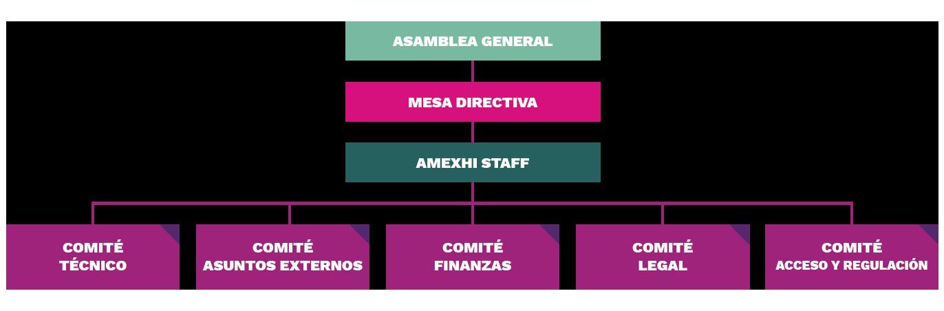 am-estructura-2019